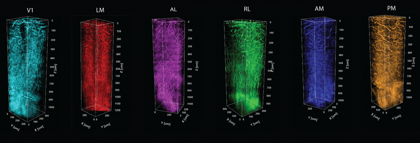 A sequence of six tall, colorful prisms shapes showing different patterns of veins and myelin fibers