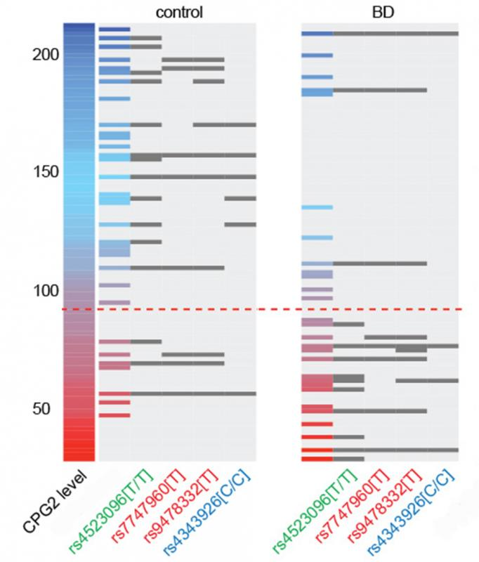In this data visualization, each horizontal line is a patient. Those with bipolar disorder were more likely to be on the lower end of the CPG2 protein expression scale, and more likely to have gene variants that reduced expression