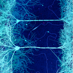 Over a dark blue background, lighter blue neurons stretch across like rungs on a ladder