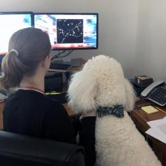 A woman and her white poodle look at a computer screend displaying neurons. We see them from behind.
