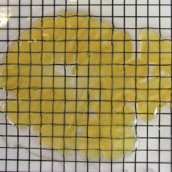 A 2mm thick slice of human brain, treated with SHIELD, lays above some gridded paper so one can see that while yellowish, it is indeed translucent