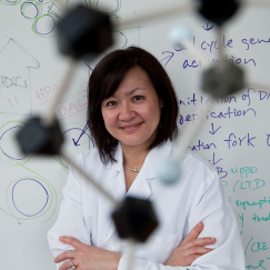Li-Huei Tsai smiling in her lab. There is a whiteboard in the background and a ball and stick molecule model in the foreground.